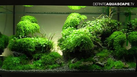 Aquascape Inspiration Aquascaping The Art Of The Planted Aquarium 2013 Xl