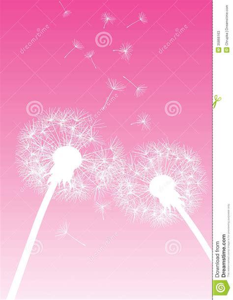 wallpaper pink dandelion vector dandelions on pink background stock photos image