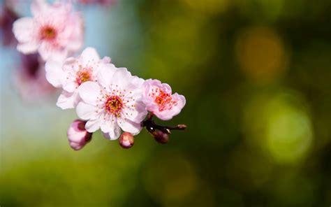 imagenes flores hd fotos de flores hd imagui