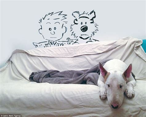 Jack White Furniture by Jimmy Choo The Bull Terrier Lost In Internet