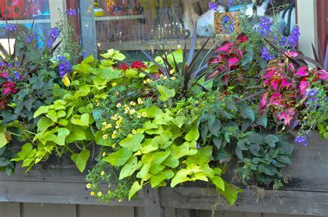 Flowers For Planter Boxes In Sun file 2008 flower box 2907451321 5b2cccfe86 o jpg