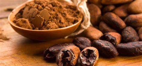 Jual Bibit Kakao Coklat jual biji coklat kering kakao fermentasi non fermentasi murah