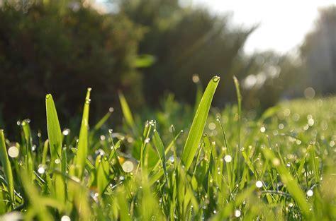 Der Perfekte Rasen by Der Perfekte Rasen Tipps Zur Pflege