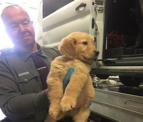 rescue puppies nyc ny state rescue 103 puppies in upstate ny after vehicle overturns