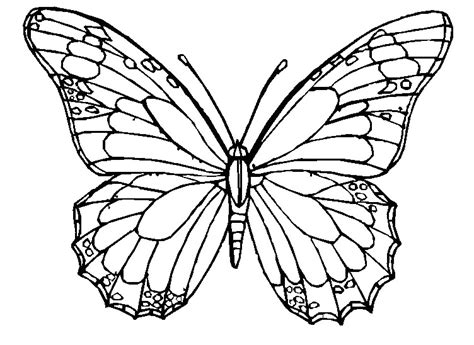 black and white coloring pages of butterflies butterfly coloring pages for adults butterflies the adult