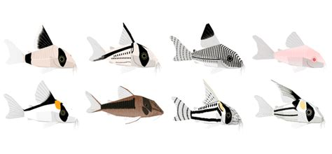Papercraft Fish - lots of corydoras fish paper models free templates
