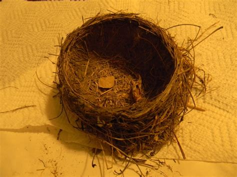 birds are building their nests sellers are you preparing