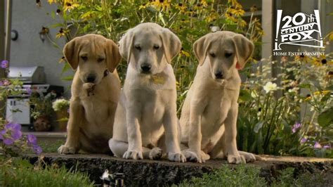 marley and me the puppy years marley and me the puppy years the sprinkler clip hd 20th century fox