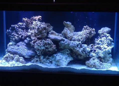 show your large tank aquascape page 8 reef2reef