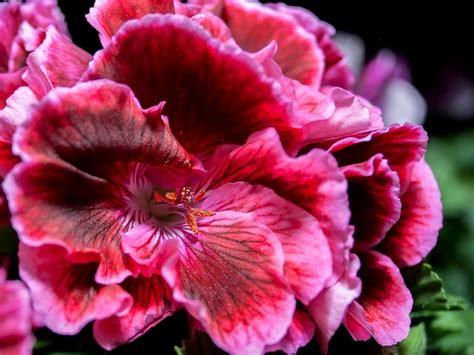 fiori estivi ecco 5 fiori estivi facili da coltivare tuttogreen