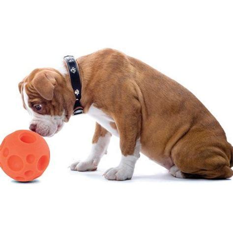 toys for bored dogs the 10 best puzzle toys that actually help bored dogs rover gift
