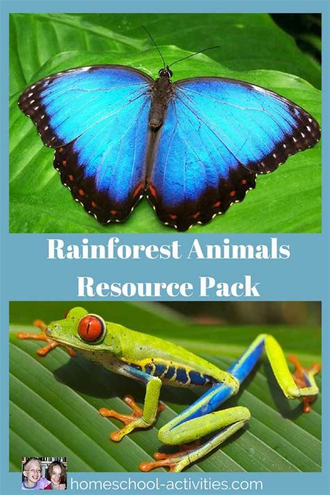 homeschool science rainforest  kids activities