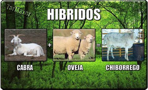 fotos animales hibridos reales hibridos de animales reales ciencia y educaci 243 n