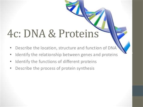 4 proteins in dna 4c dna and protein