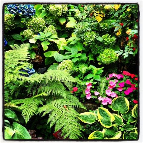 1000 images about shade gardens on pinterest gardens hosta gardens and shade plants