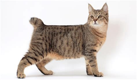 Scientific Name For House Cat by Scientific Name For House Cat Cats