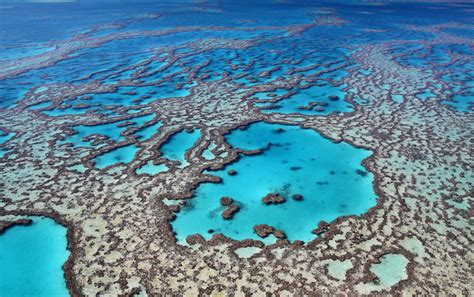 best dive spots in the world 10 best dive spots in the world with photos map touropia
