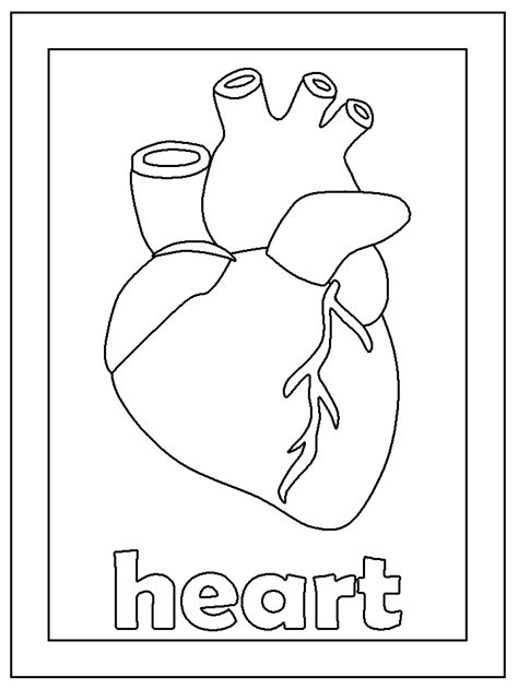 Free Human Circulatory System Coloring Pages Human Coloring Pages