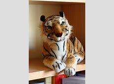 Más sobre tigres - La Bitácora del Tigre Lengua
