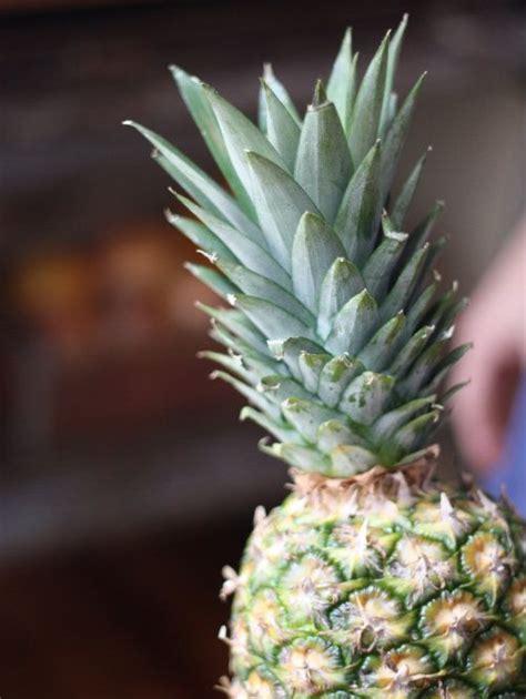 Pineapple Top the 25 best grow pineapple top ideas on
