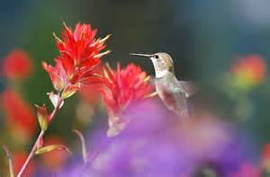 how to make your garden a hummingbird haven grow plants