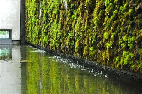 Vertical Moss Garden Moss Wall On Moss Wall Plant Wall And Plants