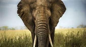 6 different species of elephants still exist