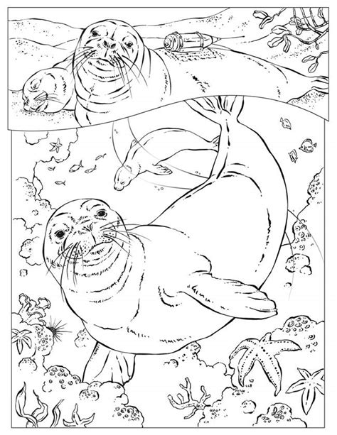 Hawa Acean Colour coloring pages of sea animals az coloring pages