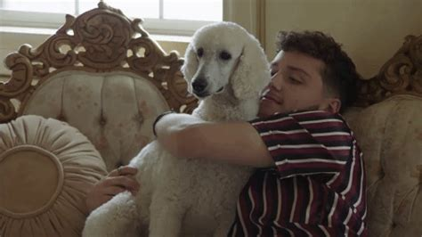 bazzi gif dog gif by bazzi find share on giphy