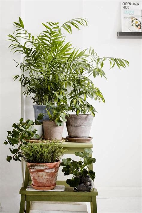 interior house plants house plants succulents cactus and indoor gardens potted plants and botanical design for the