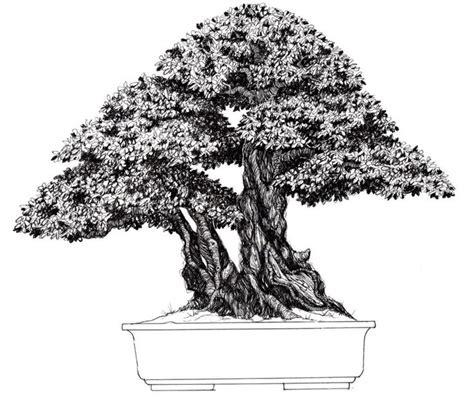 libro bonsai the art of book 100 bonsai some draws and pages by nacho marin bonsai sumi e bonsai
