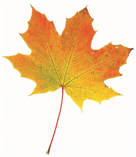 why do leaves change color in autumn do you why autumn leaves change color carolina