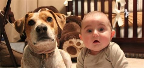 dogs that look like their owners 26 dogs that look like their owners funcage