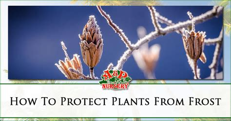 how to a protective how to protect plants from in the valley