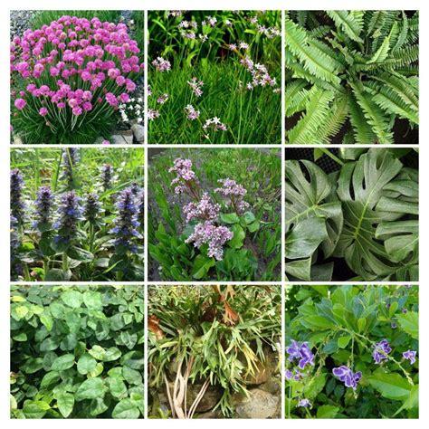 plantas para jardines las 10 especies que mejor funcionan en jardines verticales