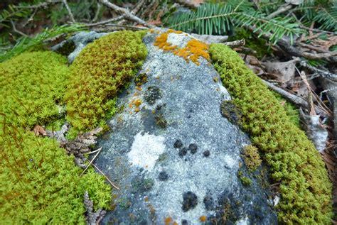 Fauna Aquascape 1000 Images About Bryophyta Mosses On Pinterest