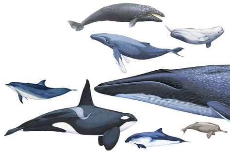 and dolphin facts about dolphins and whales dk find out