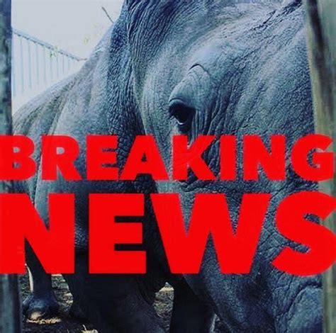 weddings world breaking news africas top news world news breaking news south africa s top court lifts ban on