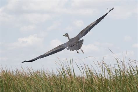 are everglades boats worth the money great blue heron picture of west palm beach airboat