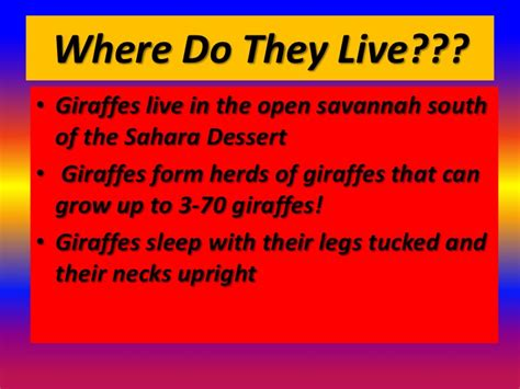where does live giraffes