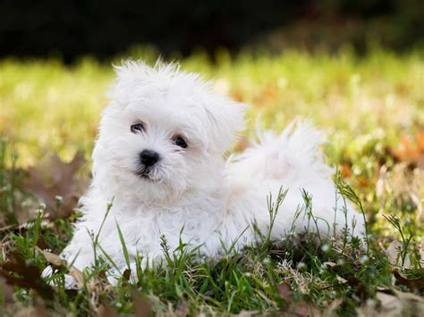 best dogs for that don t shed pet photos