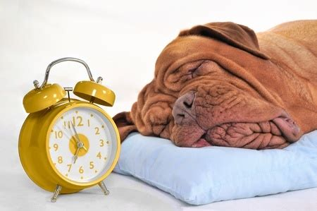 how to make a puppy go to sleep prepare your for clocks going back argos pet insurance