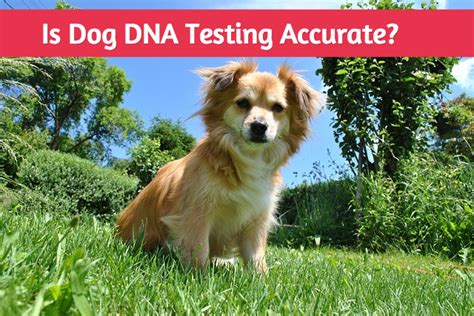 breed test how accurate are dna tests can i trust my results