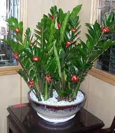 Garden Flowers A Z C 226 Y Tiền Nở Hoa Rước Lộc V 224 O Nh 224 Thế Giới C 226 Y V 224 Hoa