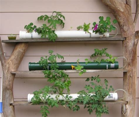 membuat tanaman hidroponik pengertian tanaman hidroponik jenis jenisnya dan cara