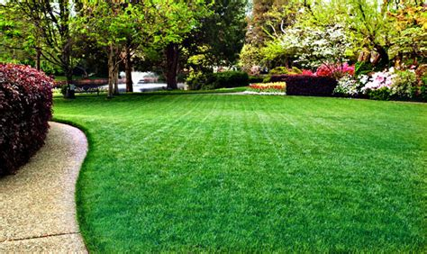 bob s tuesday s tips a little lawn care reminder