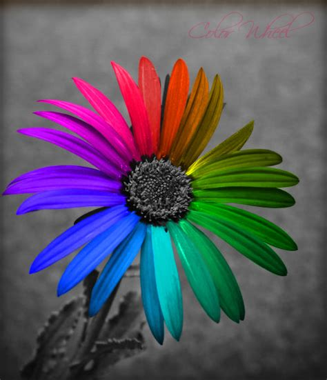 color wheel by gezusfreek on deviantart