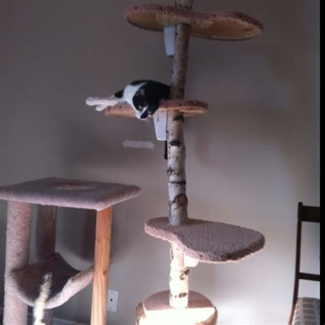 pin by cool cat mamma on make cat scratching tree pinterest