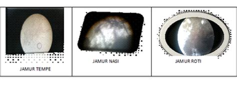 laporan praktikum biologi mengamati struktur tubuh jamur