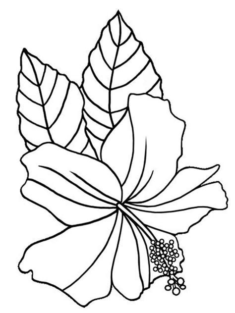 coloring page hibiscus flower hibiscus flower coloring pages download and print